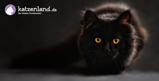 Katzenbedarf und Katzenzubehör im katzenland.de Online-Shop