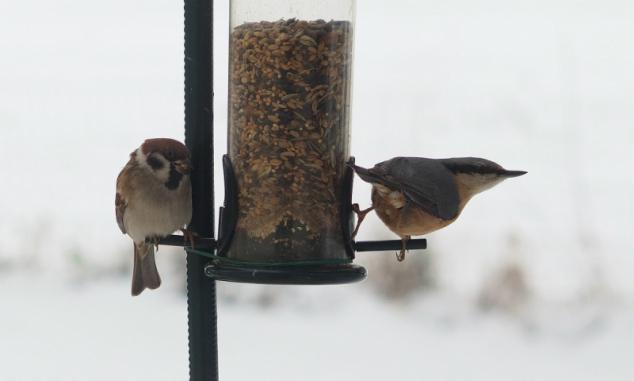 Vögelfüttern im Winter