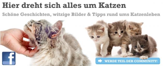 Katzenland.de Facebook-Banner