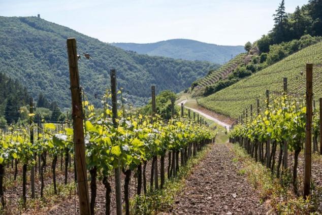 Edle Tropfen aus Deutschland – Weinsaison 2015