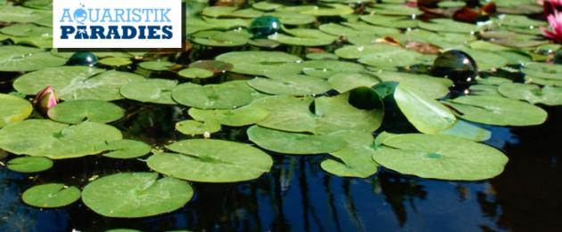 Mit Aquaristik Paradies Gutschein sparen