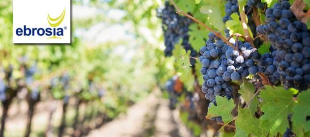 Wein, delikate Lebensmittel und Küchenzubehör - alles für den Feinschmecker!