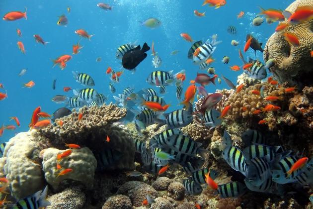 Aquarien ganz einfach online bestellen