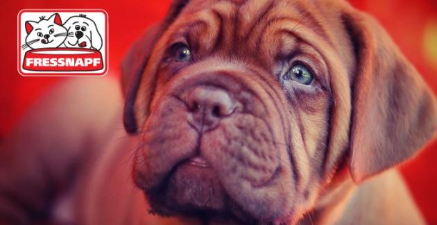 Fressnapf Online – Alles für Dein Tier