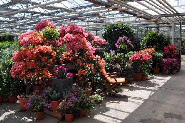 Auch Viele Exotische Blumen Gibt Es Bei Der Palmenmann
