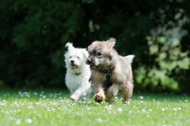 Glossar für Hunde- und Katzenfutter