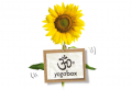 Screenshot von yogabox